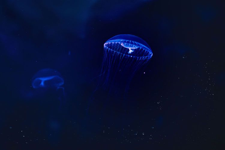 Medusas para Sony World Photography Awards