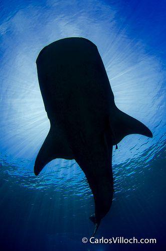 Fotografía Submarina por Carlos Villoch